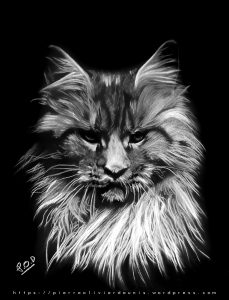 MAINE COON CAT pastel painting